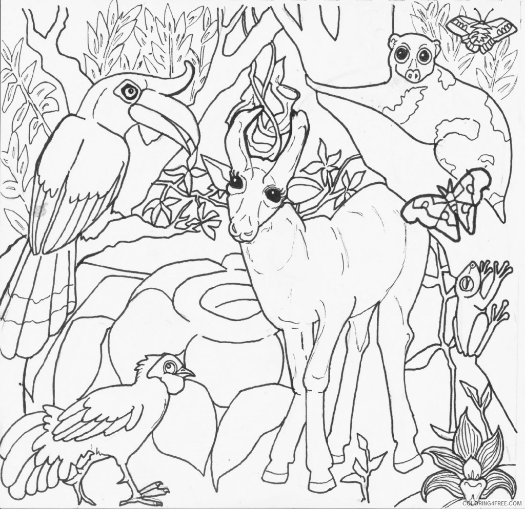 - Amazon Rainforest Animals Coloring Pages Coloring4free