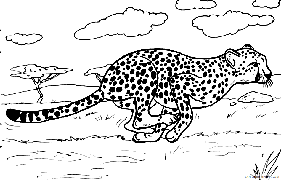 Cheetah Coloring Pages Running In Savanna Coloring4free Coloring4free Com