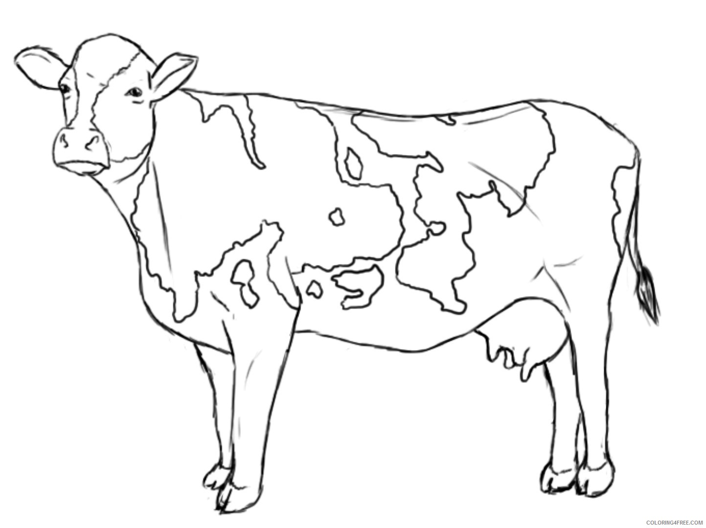 Cow Coloring Pages Printable Coloring4free Coloring4free Com