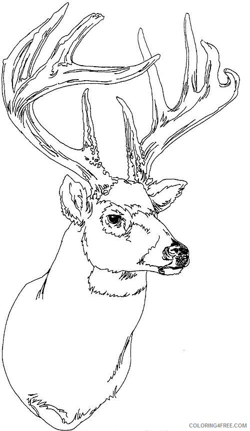 Whitetail Deer Coloring Pages To Print Coloring4free Coloring4free Com