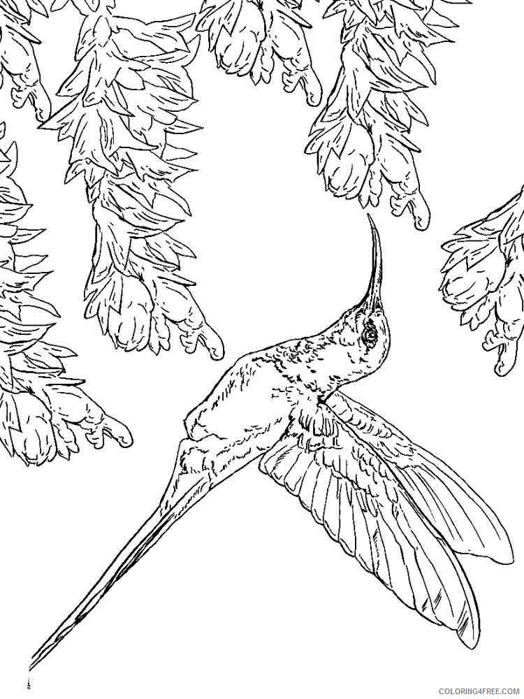 free hummingbird coloring pages to print Coloring4free ...