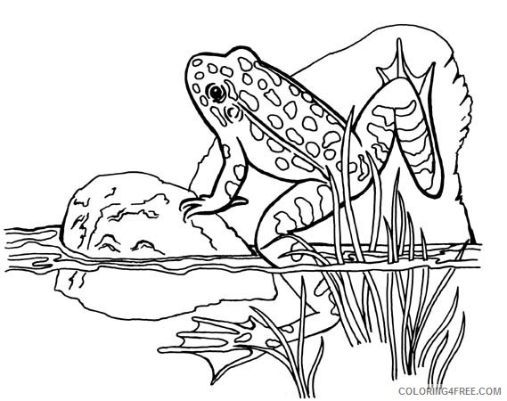 25 Delightful Frog Coloring Pages For Your Little Ones | 450x569