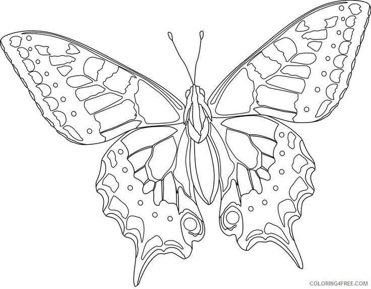 Butterfly Coloring Pages for Kids, 100 Images. Print for Free! | 573x736