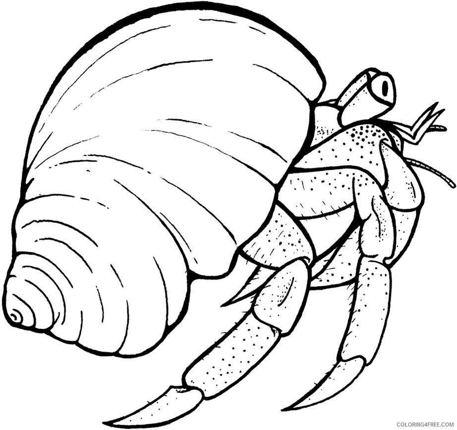 - Hermit Crab Coloring Pages To Print Coloring4free - Coloring4Free.com