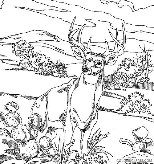 Realistic Deer Coloring Pages To Print Coloring4free