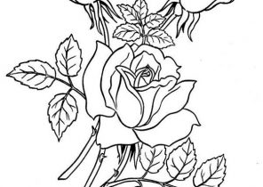 retty rose coloring page - roses outlines PNG image with ... | 210x296