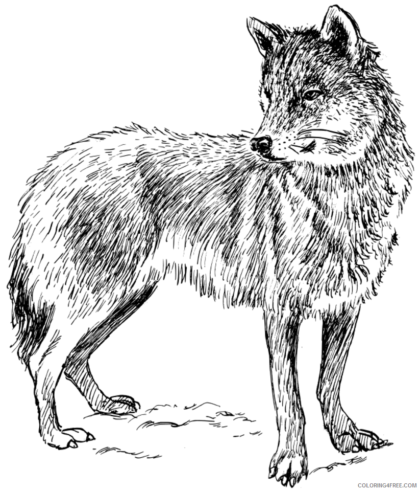 realistic wolf coloring pages to print Coloring4free ...