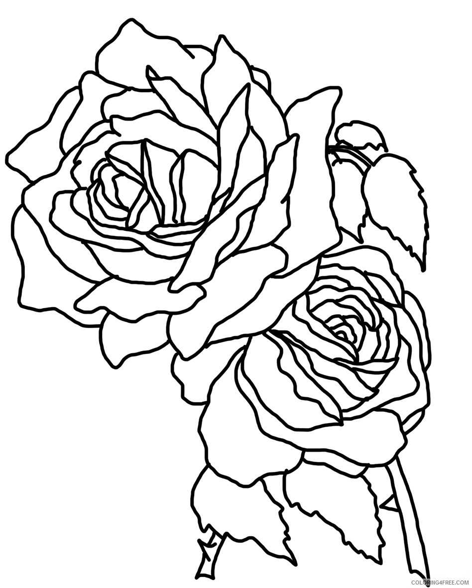 rose coloring pages for girls Coloring18free   Coloring18Free.com