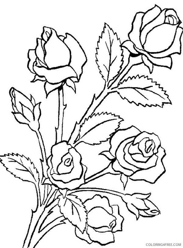 Rose Coloring Pages Realistic | 101 Coloring | 812x600