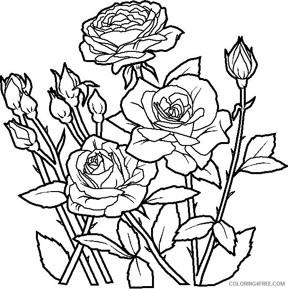 - Roses Flower Coloring Pages To Print Coloring4free - Coloring4Free.com