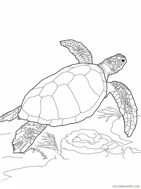 - Sea Turtle Coloring Pages Free To Print Coloring4free - Coloring4Free.com