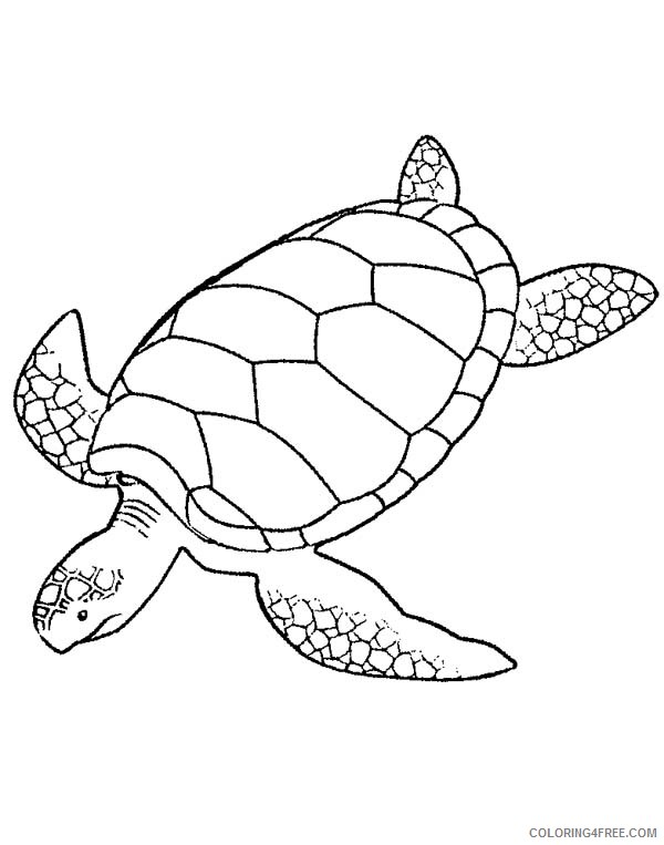 - Sea Turtle Coloring Pages Printable Coloring4free - Coloring4Free.com