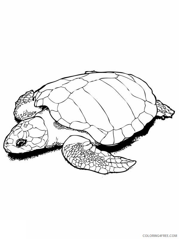 Sea Turtle Coloring Pages Realistic Coloring4free - Coloring4Free.com