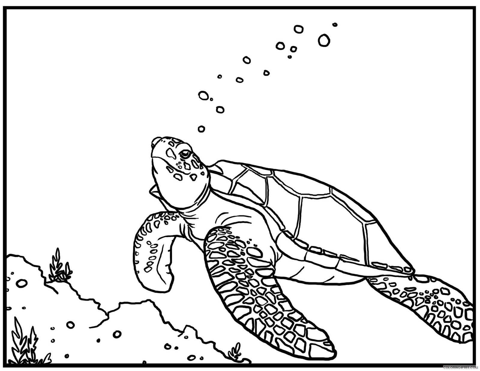Sea Turtle Coloring Pages Swimming Underwater Coloring4free