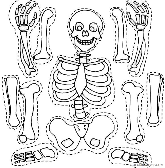 Skull Anatomy Coloring Pages | Anatomy coloring book, Dental ... | 592x582