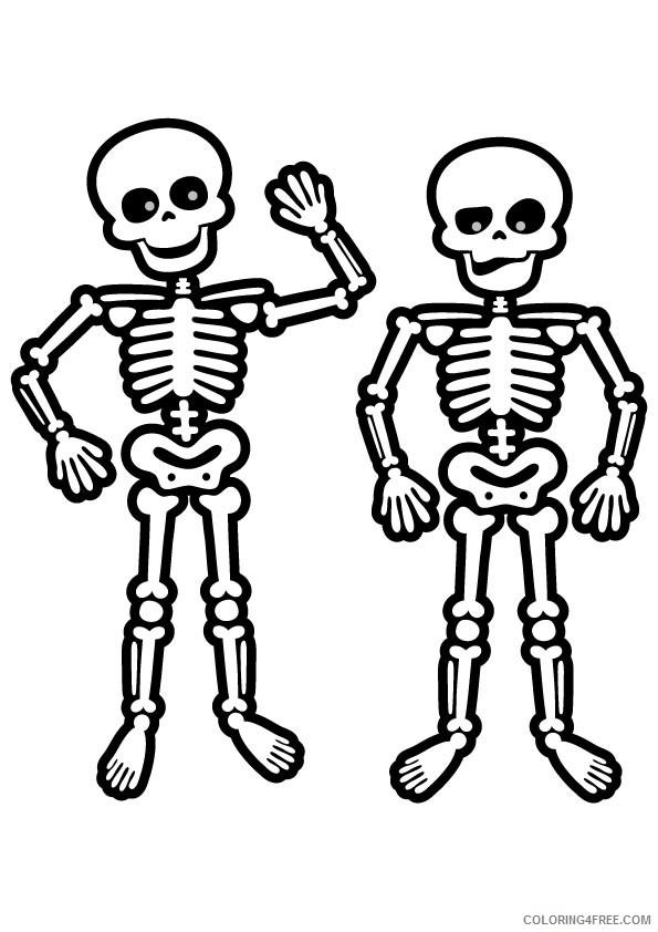 Скелет в картинках для детей