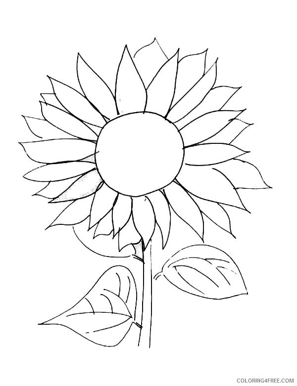 free sunflower coloring pages for kids Coloring4free ...