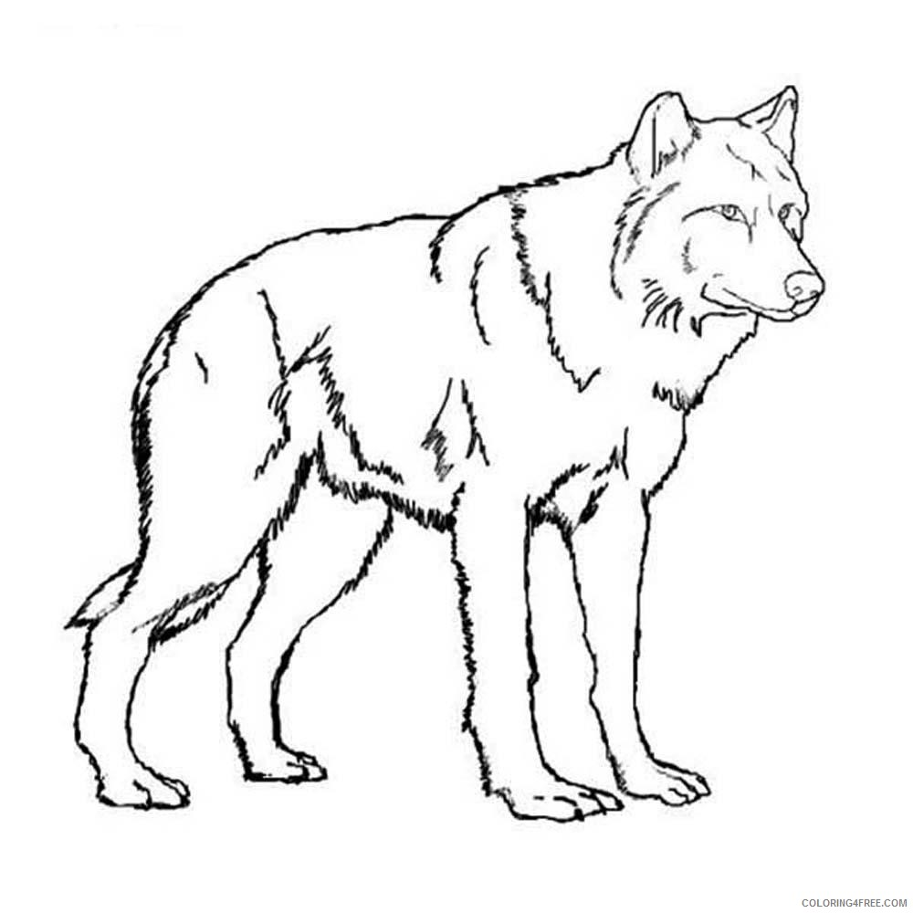 Wolf Coloring Pages Two Wolves Fighting Coloring4free Coloring4free Com