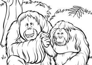 Orangutan Coloring Pages | 210x296