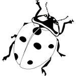 Ladybug Coloring Pages