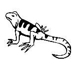 Lizard Coloring Pages