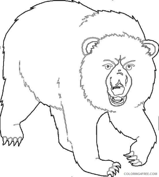 all bears JlMskn coloring