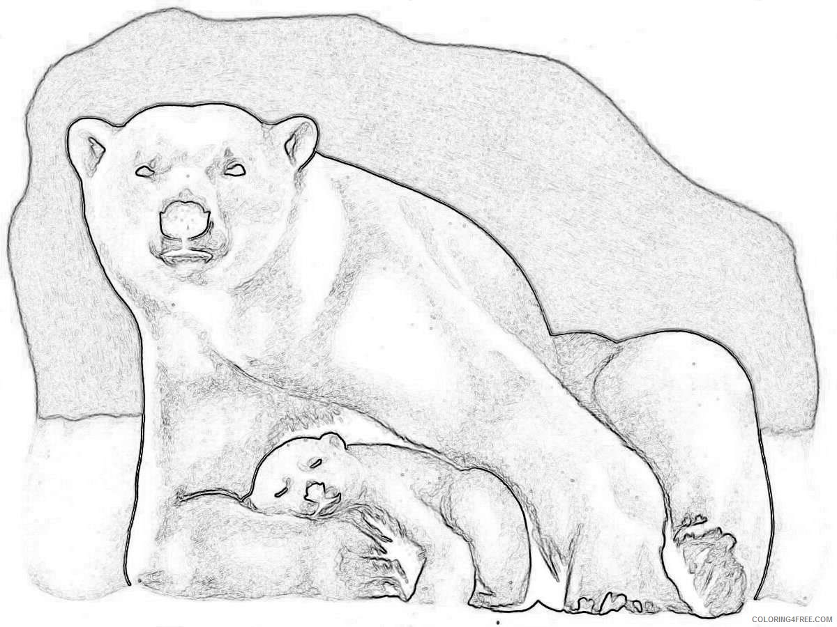 baby polar bear cartoon that you can download to you w1PqYE coloring