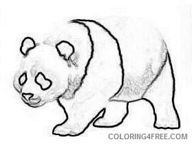 beary bears bear facts qEB8RN coloring