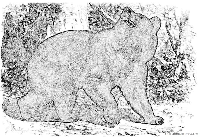 black bear 1 page of public domain 4DWaRP coloring