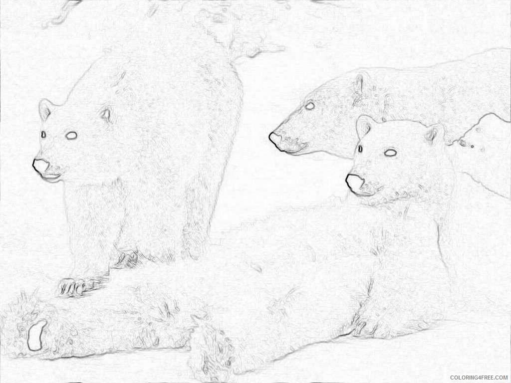 clip art and picture polar bear wallpaper desktop subzRB coloring