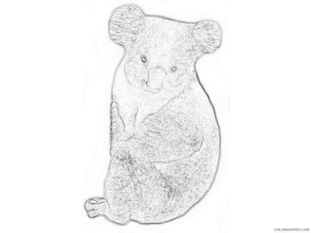 freeclipartpictures comkoala bear WtMntY coloring
