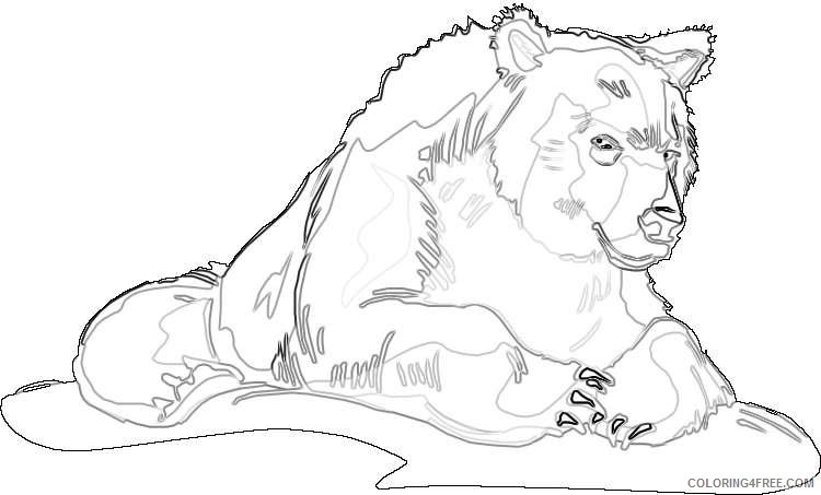 grizzly bear bear grizzly for you coloring