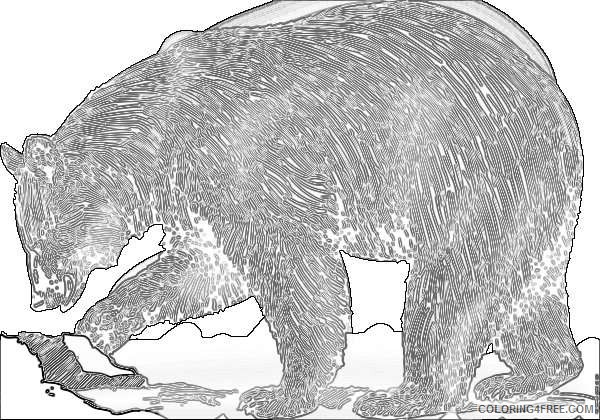 grizzly bear for download about 8 2 coloring