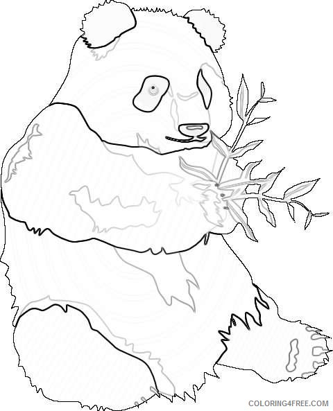 panda bear online K13W7K coloring