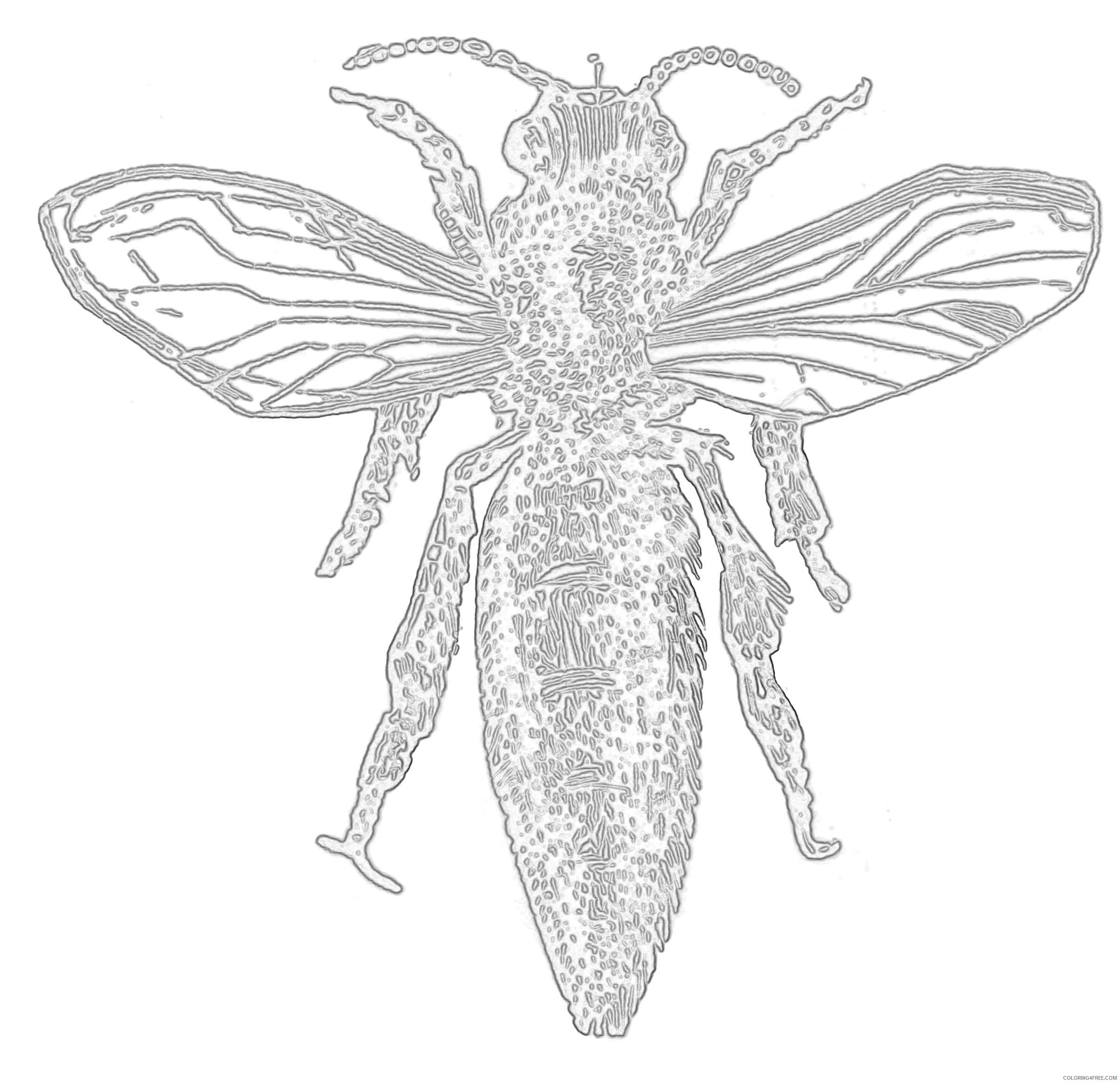 queen bee etc xnwUSB coloring