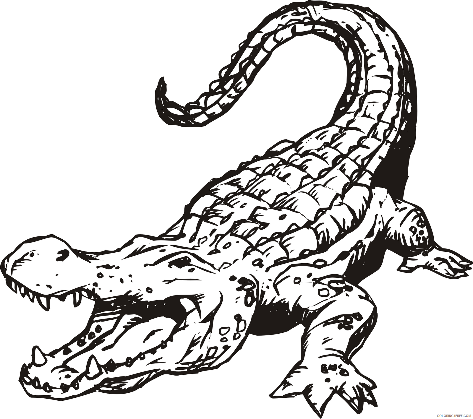 Alligator Coloring Pages Alligator free clipart Printable Coloring4free