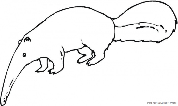 Anteater Coloring Pages anteater 57 jpg Printable Coloring4free