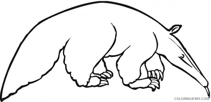 Anteater Coloring Pages anteater 77 jpg Printable Coloring4free