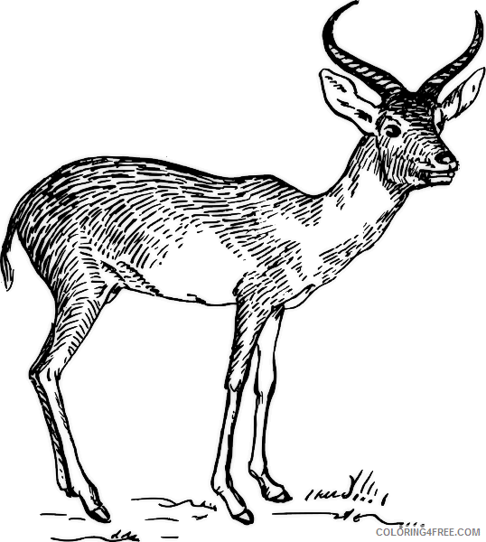 Antelope Coloring Pages search terms antelope head black Printable Coloring4free