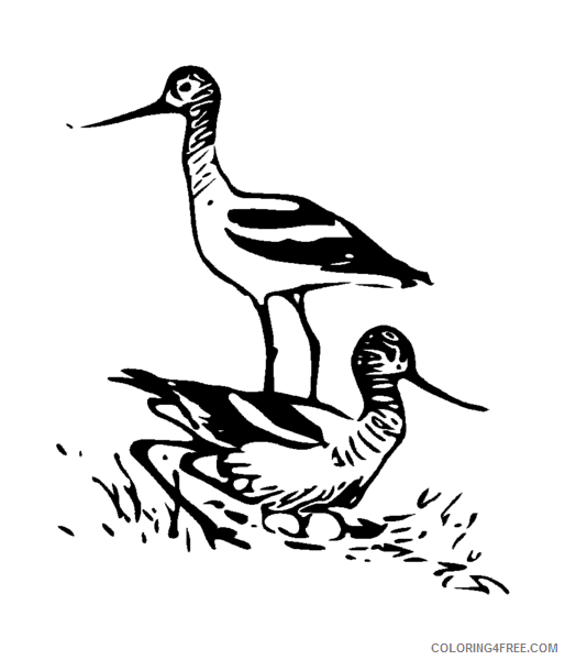 Avocet Coloring Pages Avocet 3 png Printable Coloring4free