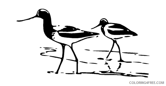 Avocet Coloring Pages Avocet 4 png Printable Coloring4free