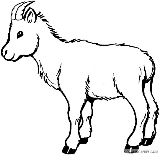 Baby Goat Coloring Pages baby goat 9tp9e9jte jpeg Printable Coloring4free