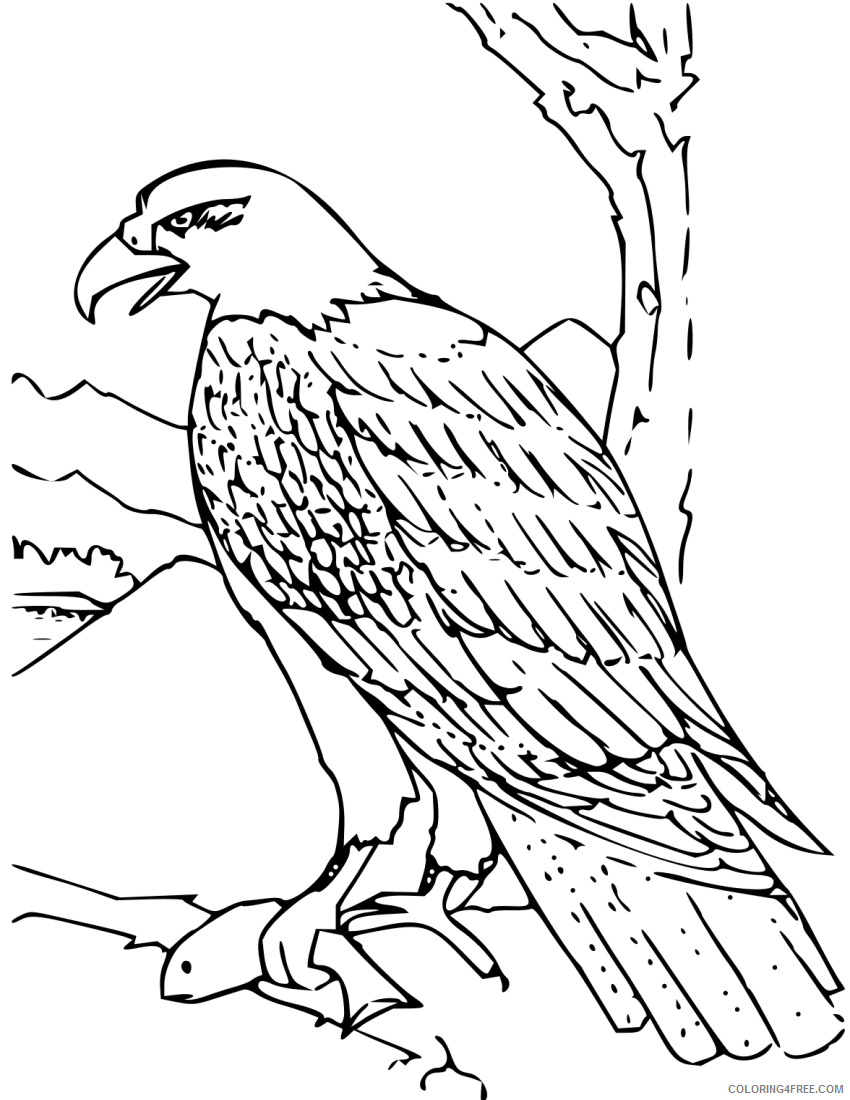 Bald Eagle Coloring Pages com education animals Printable Coloring4free