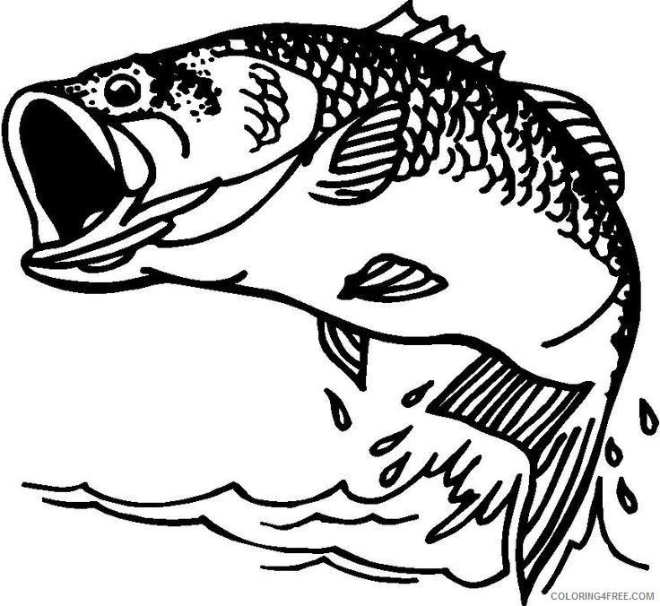 Bass Fish Coloring Pages Bass Fish Clip Artbass Fish Printable  Coloring4free - Coloring4Free.com