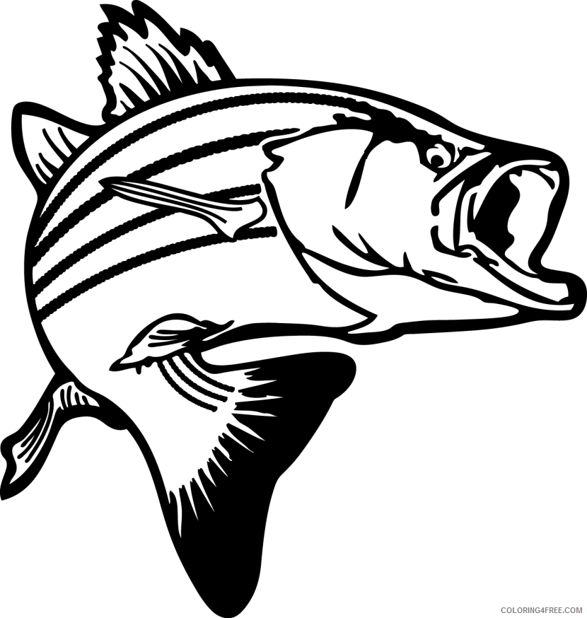 Bass Fish Coloring Pages Fish bass png Printable Coloring4free