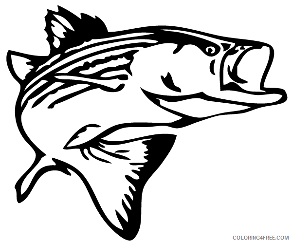 Bass Fish Coloring Pages bass fish outline clip art Printable Coloring4free