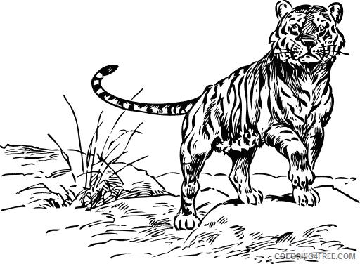 Bengal Tiger Coloring Pages bengal tiger 79 png Printable Coloring4free