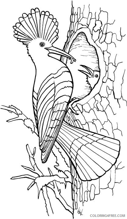Bird Coloring Pages bird 41 jpg Printable Coloring4free