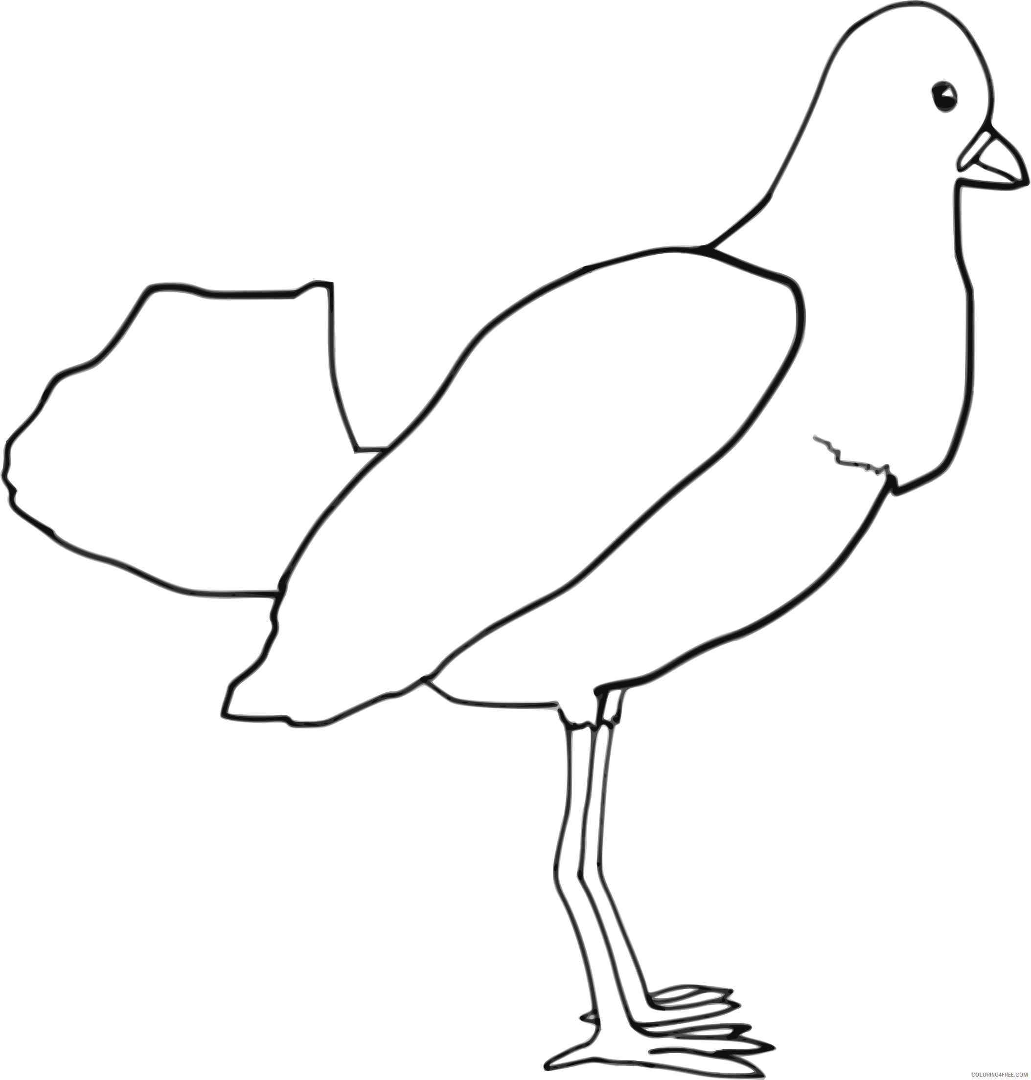 Bird Coloring Pages birdoutline bpng Printable Coloring4free