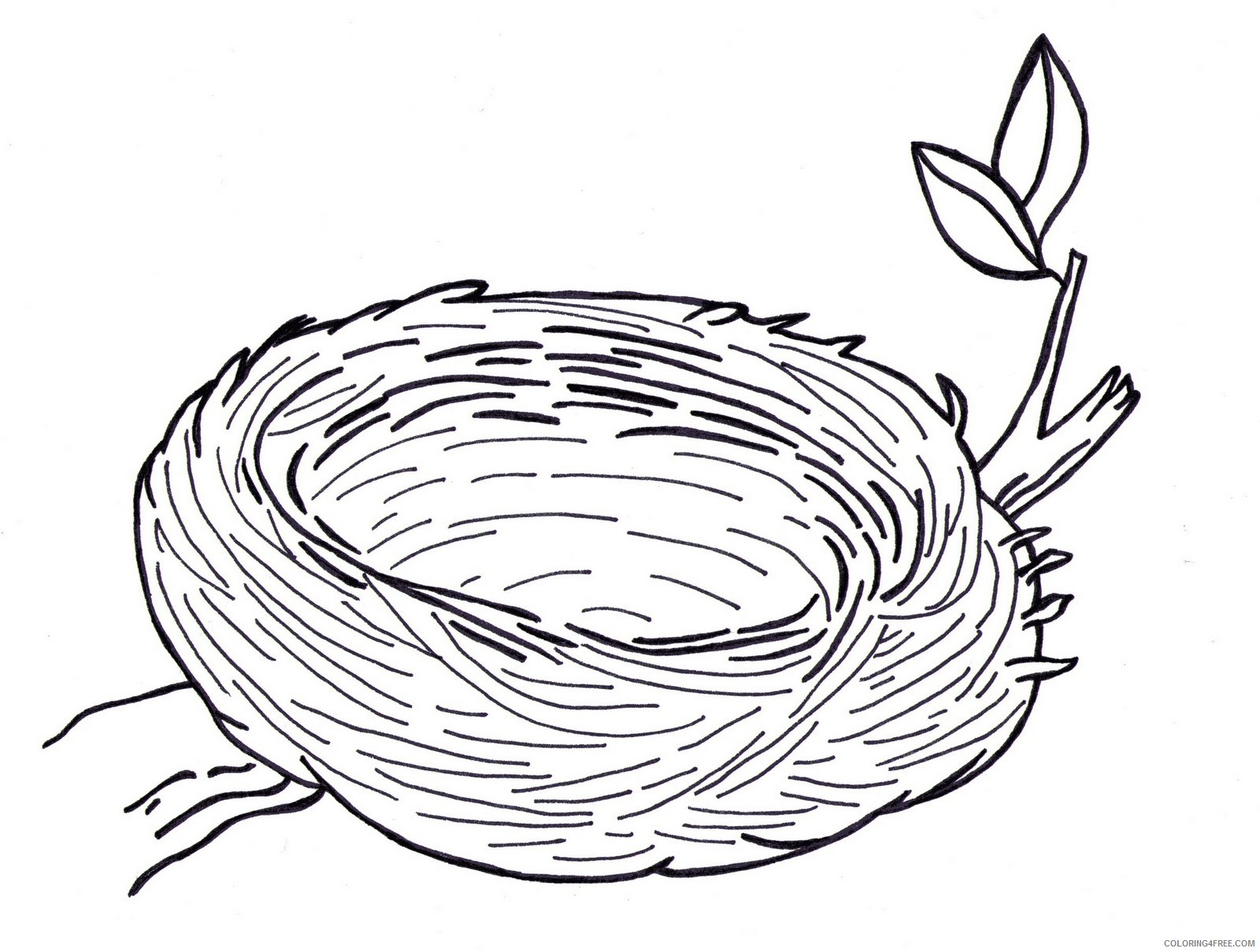 Bird Nest Coloring Pages bird nest images pictures Printable Coloring4free